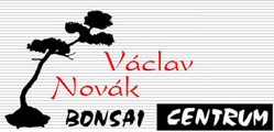 bonsai-novak