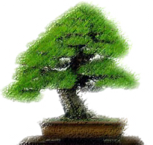 windybankbonsai